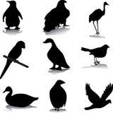 De silhouetten van de vogel Stock Foto