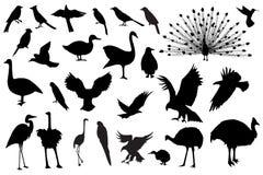 De silhouetten van de vogel Stock Afbeelding