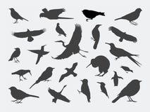 De Silhouetten van de vogel royalty-vrije illustratie