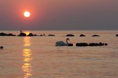 De Silhouetten van de zonsondergang Stock Afbeelding
