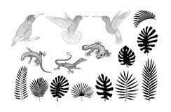 De silhouetten van hagedissen, gekko en tropische banaan, palm, monstera gaat vector weg vector illustratie