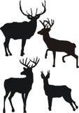 De silhouetten van herten Royalty-vrije Stock Foto's