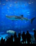 De silhouetten van het aquarium Stock Afbeelding