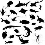 De silhouetten van het aquarium Stock Afbeeldingen