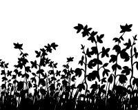 De silhouetten van het gras Stock Foto's