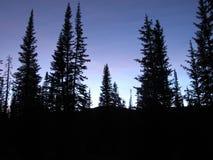 De Silhouetten van de pijnboomboom van de Duistere Avond in de Wasatch-Bergen royalty-vrije stock foto