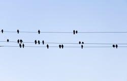 De silhouetten van vogels Stock Afbeeldingen