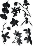 De silhouetteninzameling van de orchidee Stock Foto