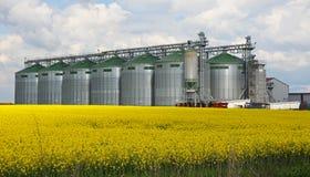 De silo van de Canolaolie stock afbeelding
