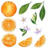 De sinaasappel clipart plaatste Hand getrokken waterverfillustratie stock illustratie