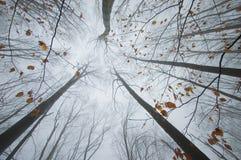 De sinaasappel doorbladert op boomtakken in de herfstbos Stock Foto's