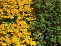 De sinaasappel en groen doorbladert Stock Afbeeldingen