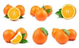 De sinaasappel van de inzameling Stock Fotografie
