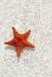 De sinaasappel van de zeester in golvend ondiep water Stock Afbeeldingen