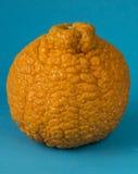 De sinaasappel van Sumomadarine Stock Afbeelding