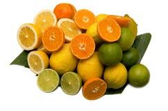 De sinaasappelen en de citroenen van de kalk Royalty-vrije Stock Afbeeldingen