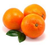 De sinaasappelen en doorbladert Royalty-vrije Stock Foto