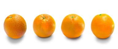 De sinaasappelen is het fruit van de citrusvrucht Stock Foto