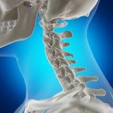 De skeletachtige hals royalty-vrije illustratie
