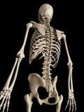 De skeletachtige rug vector illustratie