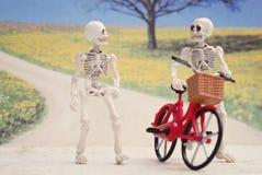 De skeletlente Stock Foto's