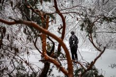 De skiër in een sneeuwbos na een sneeuwstorm neemt door de gevallen takken van bomen heimelijk stock foto's