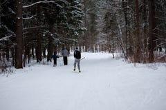 De skiërs lopen door een bos van de de winterpijnboom Stock Foto's