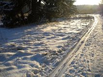 De ski van de de winterdag tussen de bomen in werking die wordt gesteld die stock afbeeldingen