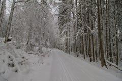 De skisleep van het land Stock Afbeelding