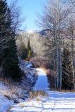 De skitoevlucht van de sneeuwmassa Stock Fotografie