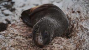 De slaap en het liggen op rotsenverbinding stock videobeelden