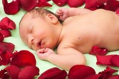 De slaap van de baby in bloemen Stock Foto