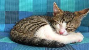 De slaap van de babykat stock footage