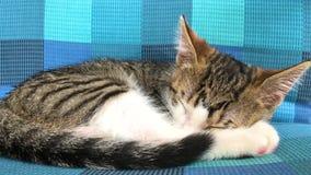 De slaap van de babykat stock videobeelden