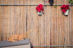 De slaap van de gemberkat naast een bamboeomheining Royalty-vrije Stock Afbeelding