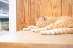 De slaap van de gemberkat op hout De wacht van huis in binnenlandse het leven Stock Afbeelding