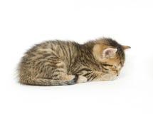 De slaap van de gestreepte kat Stock Foto