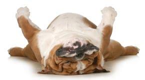 De slaap van de hond Stock Afbeeldingen