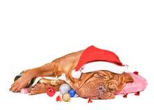 De Slaap van de Hond van de kerstman Royalty-vrije Stock Foto's