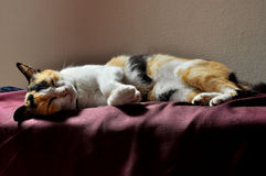 De slaap van de kat Stock Fotografie