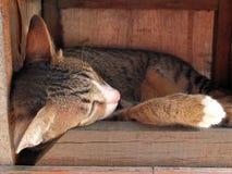 De slaap van de kat in houten doos Stock Fotografie