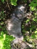 De slaap van de kat ter plaatse Stock Foto's