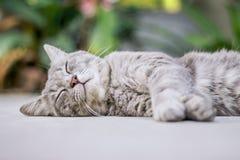 De slaap van de kat ter plaatse Royalty-vrije Stock Fotografie