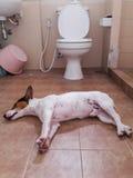 De slaap van de puppyhond op de vloer in toiletruimte Royalty-vrije Stock Afbeeldingen