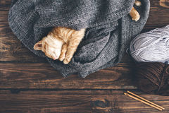 De slaap van het Gignerkatje Stock Fotografie