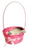 De slaap van het katje in een mand Royalty-vrije Stock Fotografie