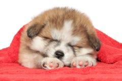 De slaap van het puppy, die met een deken wordt behandeld Royalty-vrije Stock Afbeeldingen