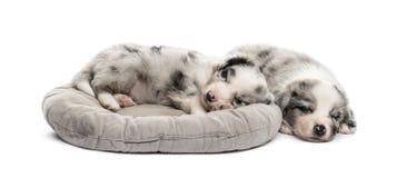 De slaap van het twee die kruisingspuppy in een voederbak op wit wordt geïsoleerd stock afbeeldingen