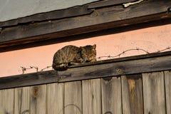 De slaap van de straatkat op de omheining met prikkeldraad stock foto's