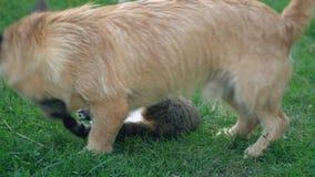 De slag van een hond en een kat stock videobeelden